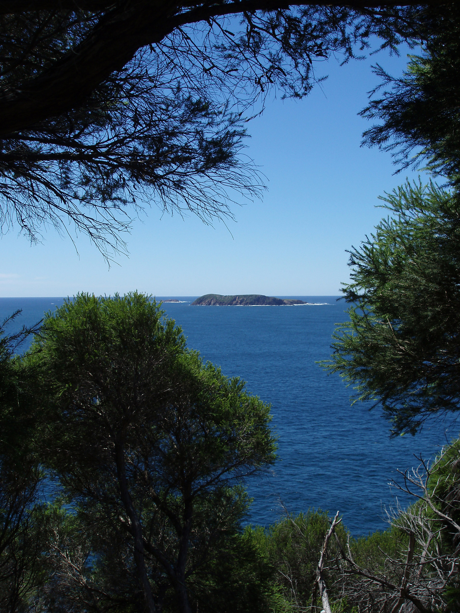 a view through bush vegetation to a distant island out to see from tomaree head