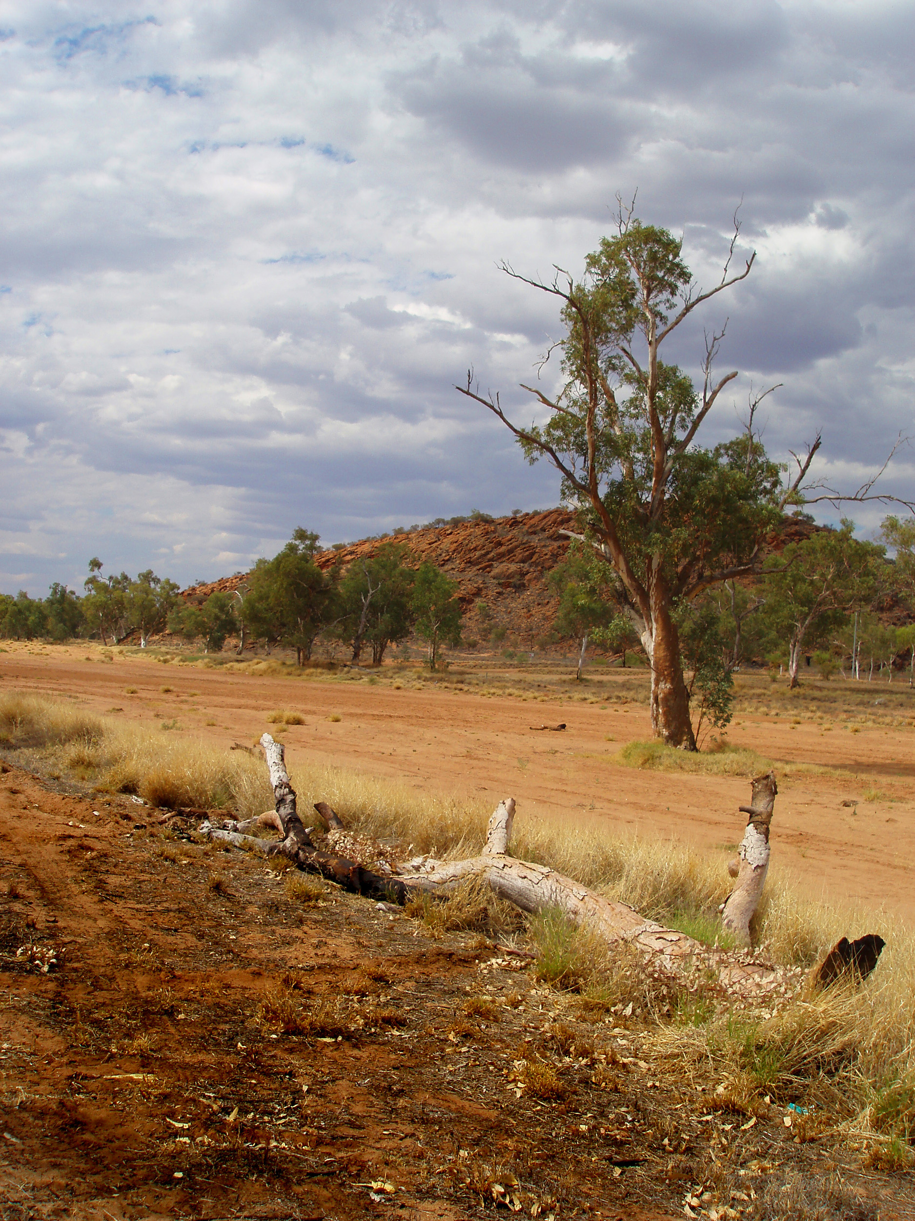 the dry sandy riverbed of the todd river near alice springs, NT