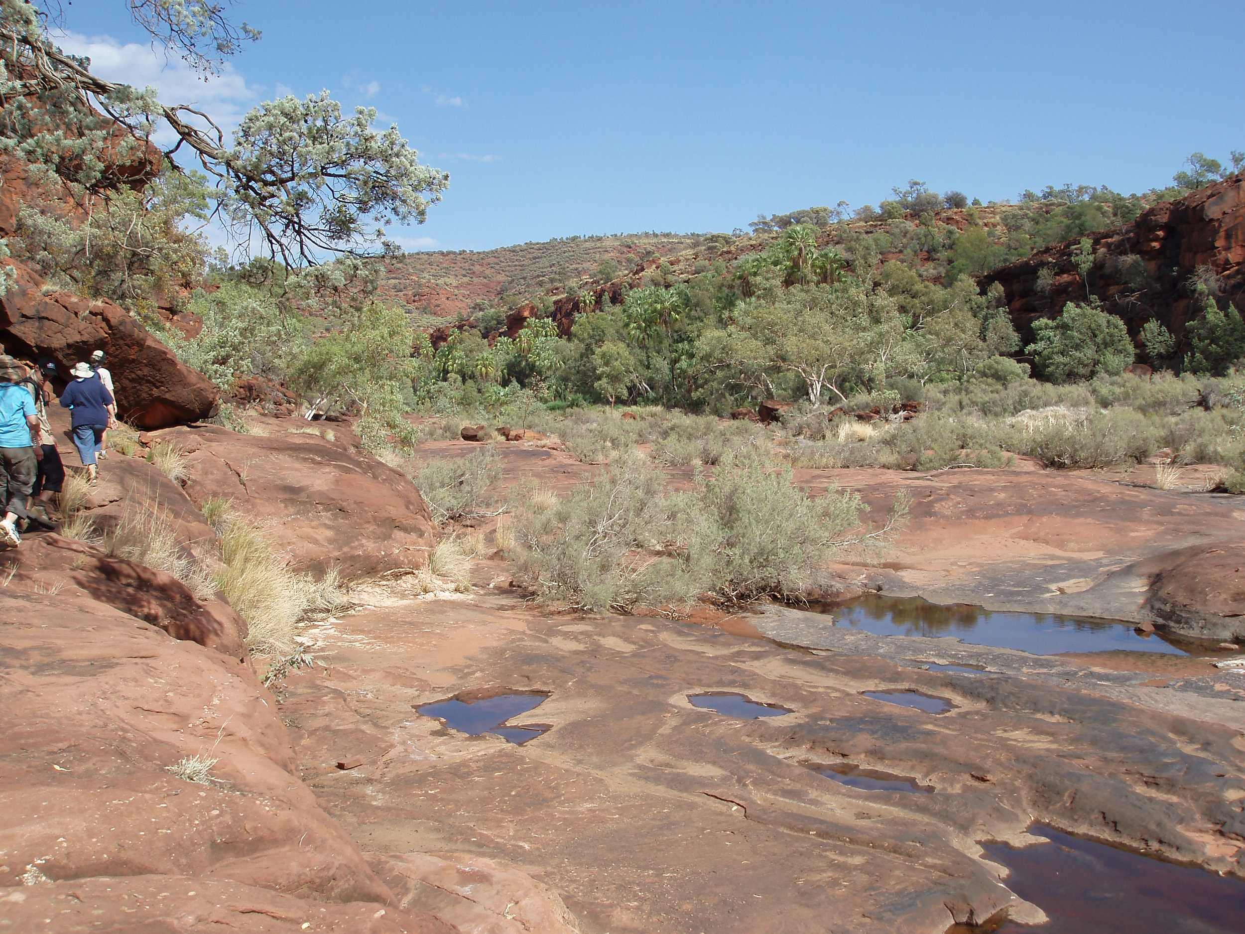 almost dry river bed of the finke river in palm valley