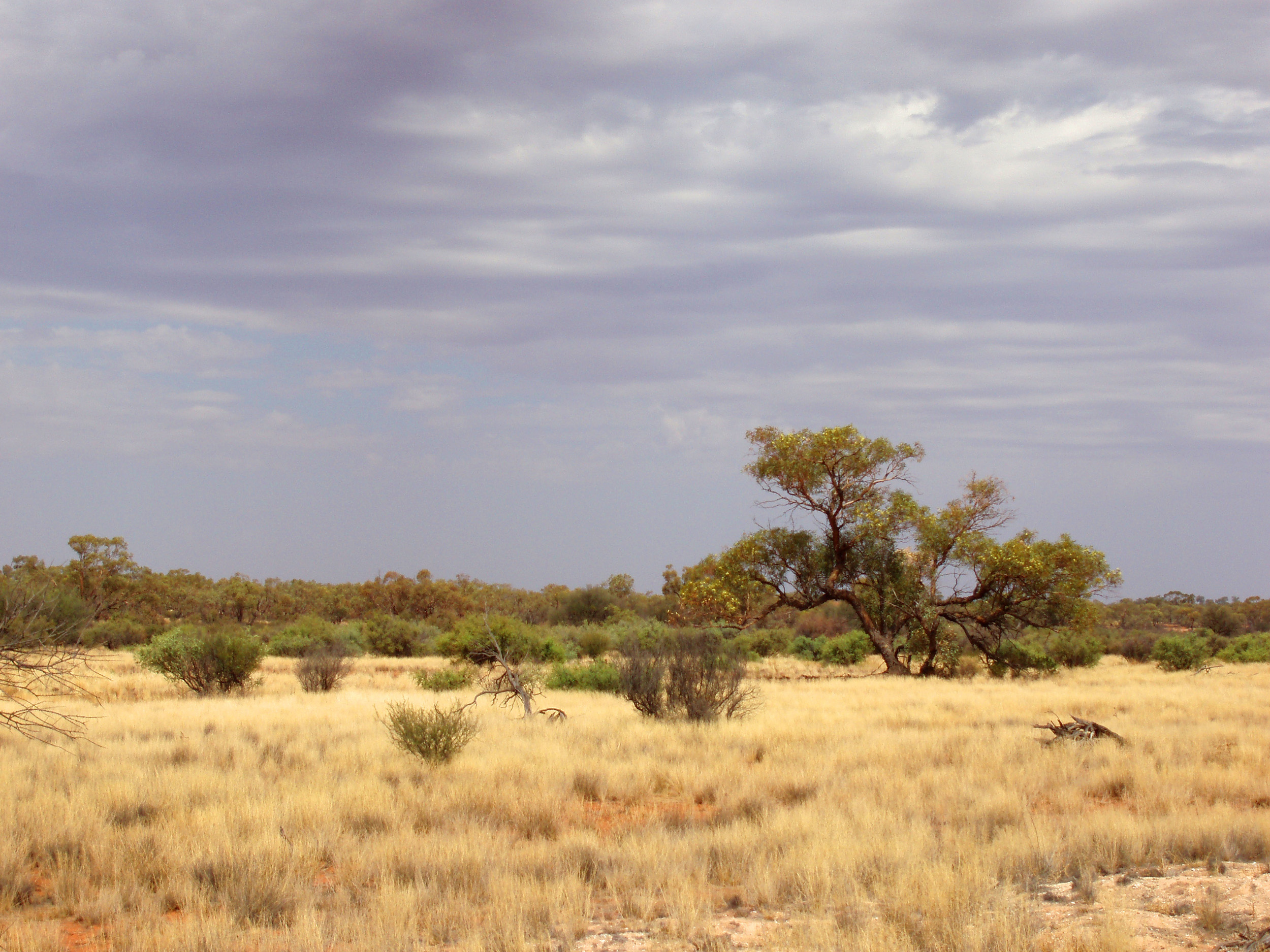 a arid zone landscape - miles from anywhere