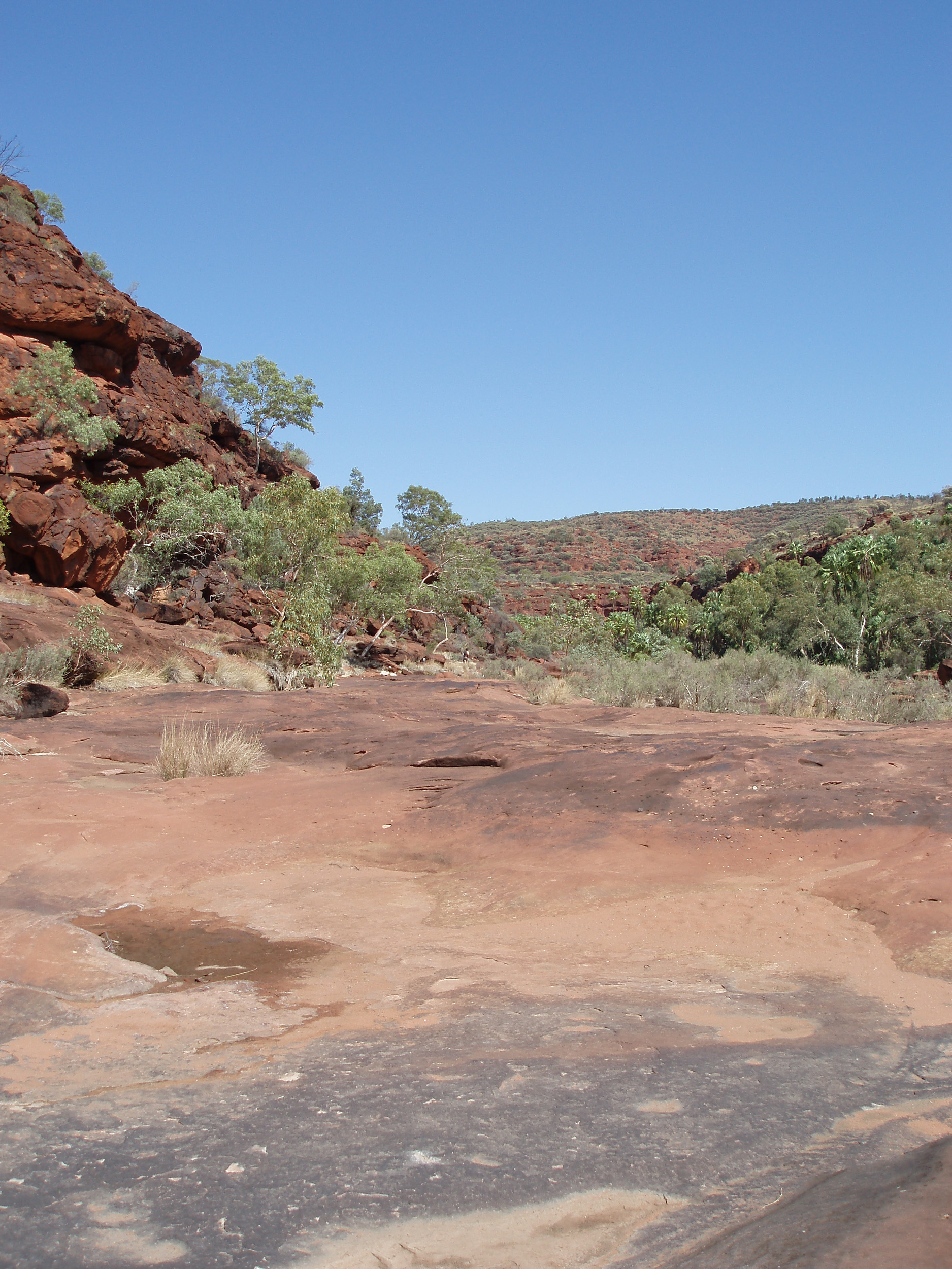 dry river bed of the finke river as it passes through palm valley