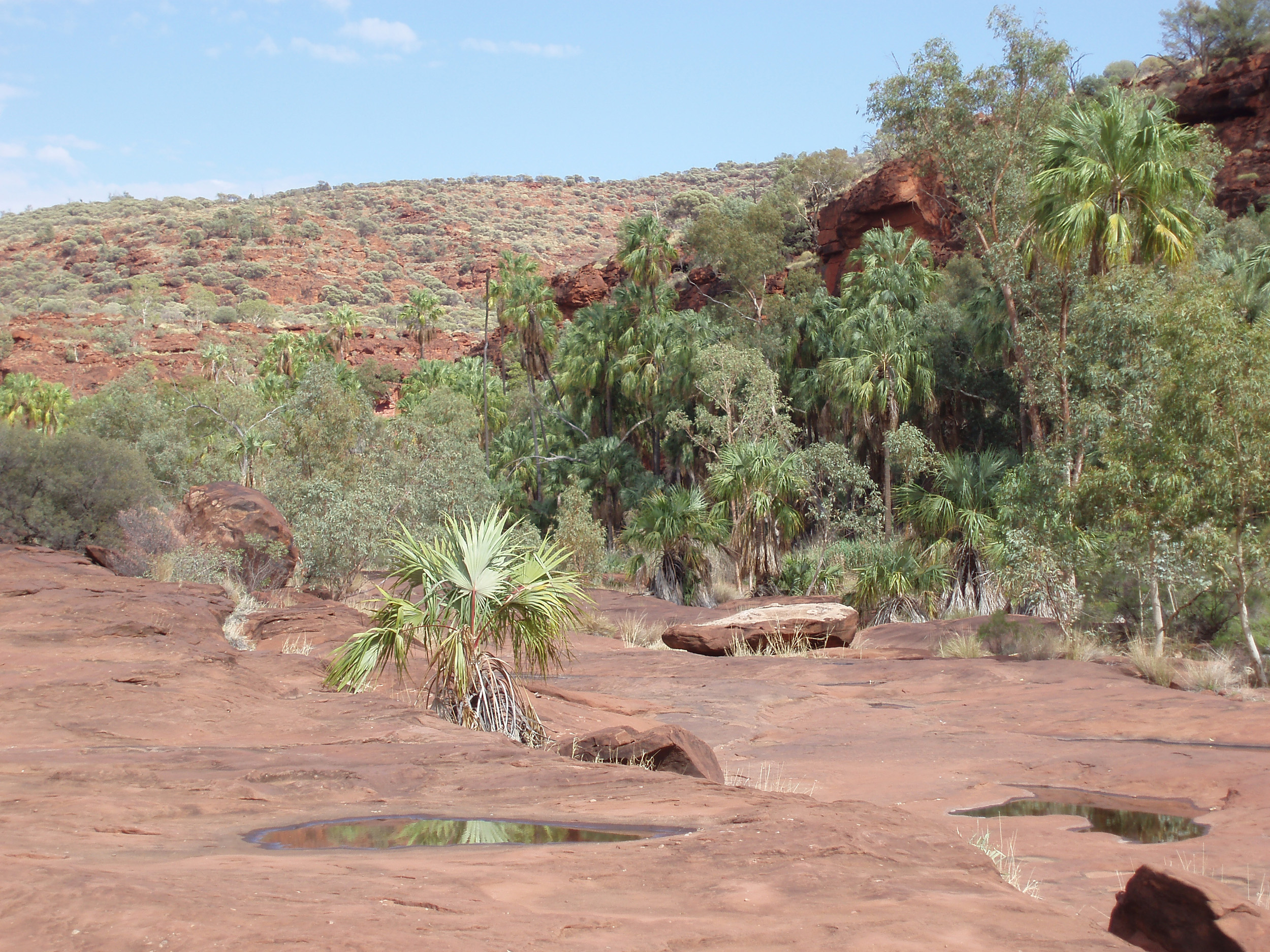 parched sandstone bed of the finke river as it passes through palm valley