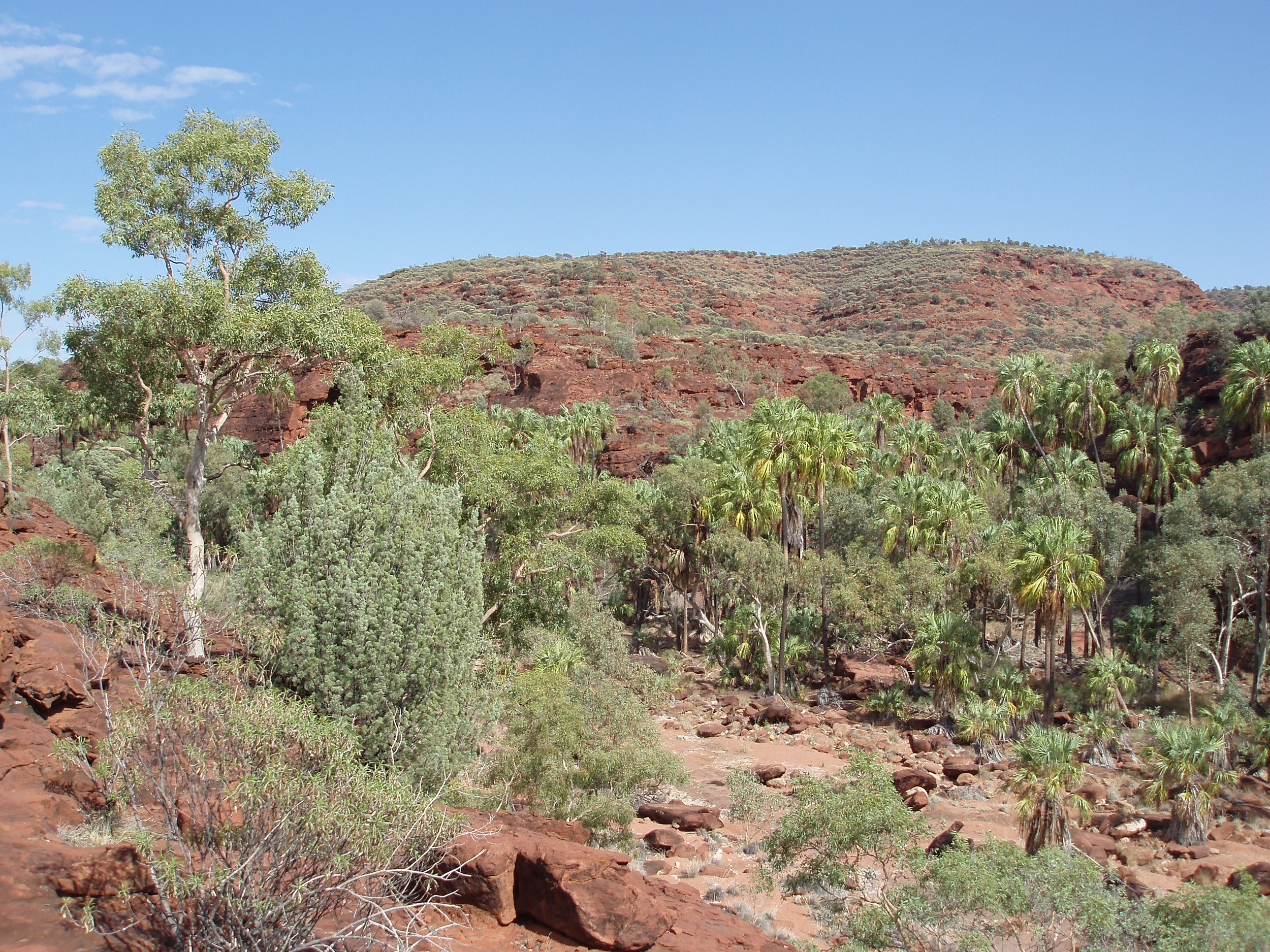 a panoramic view of palm valley in the Finke Gorge Natinal Park, NT