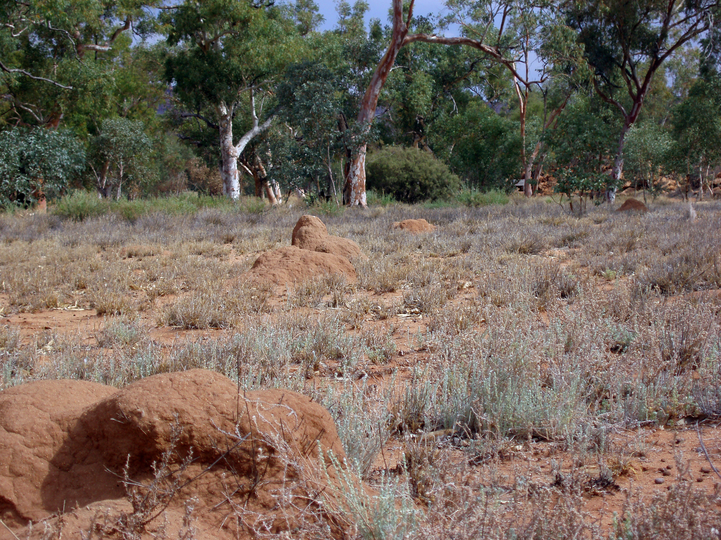 several small termite mounds near alice springs