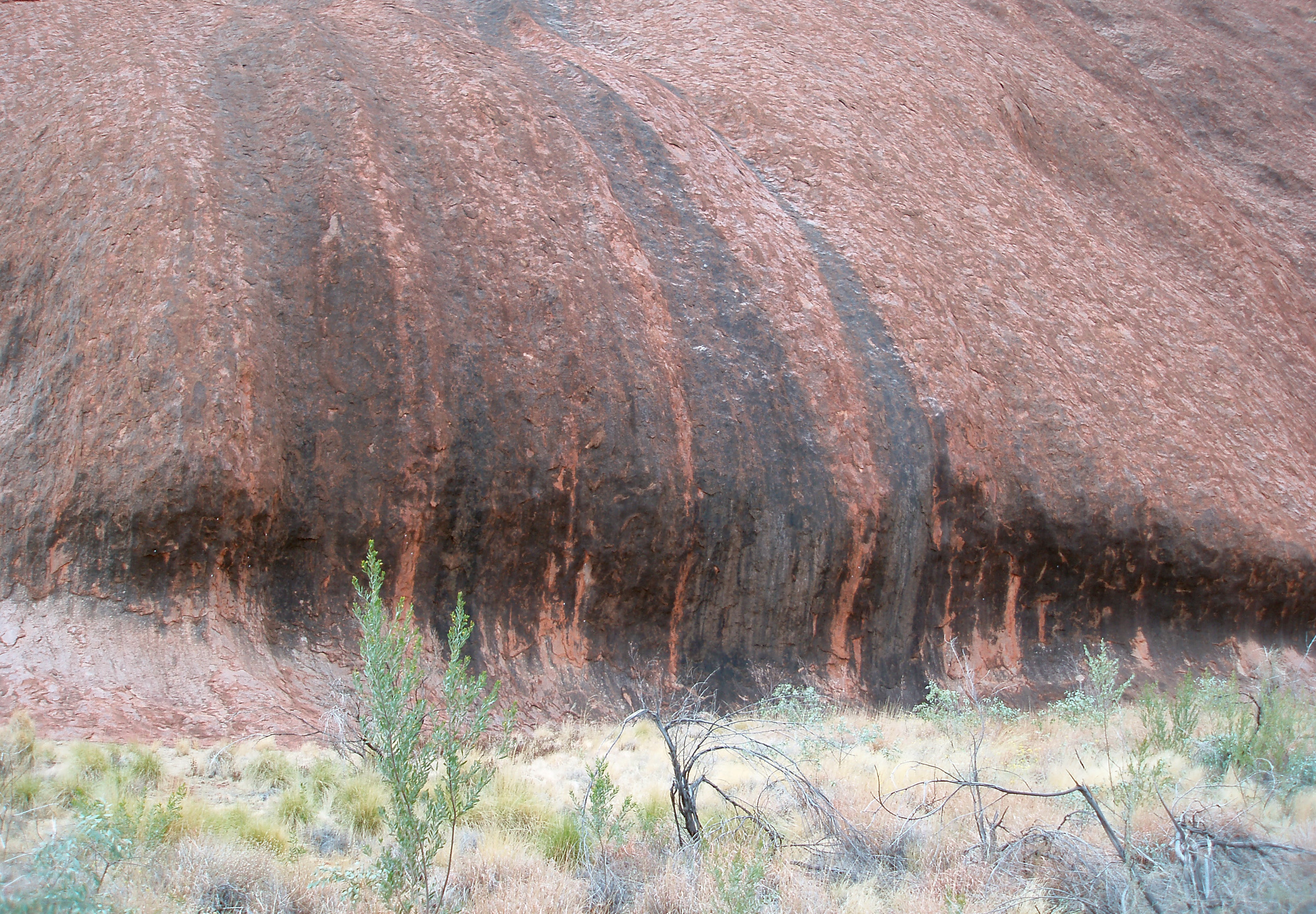 eroded rock at the base of uluru, shaped into a wave by wind blown sand
