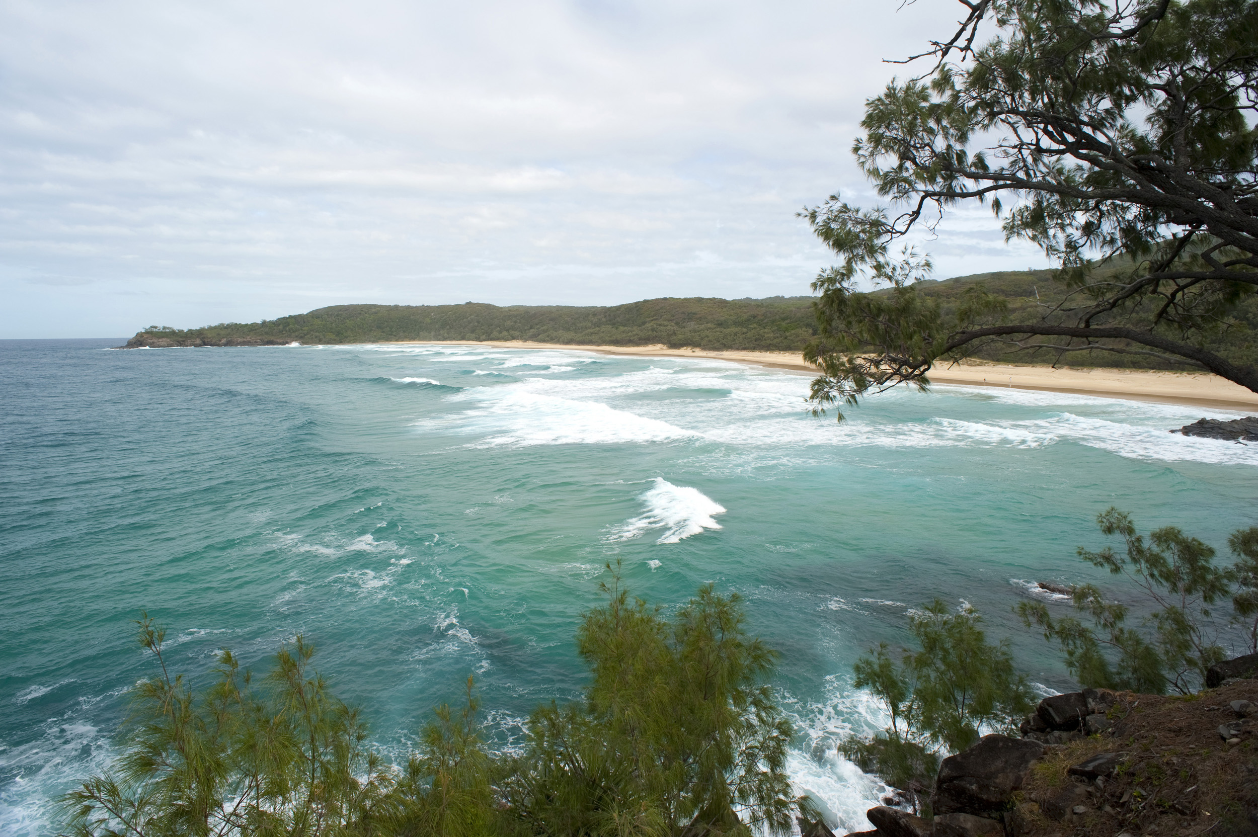 View past foliage of the sandy golden beach at Alexandria Bay, Noosa in Queensland, Australia