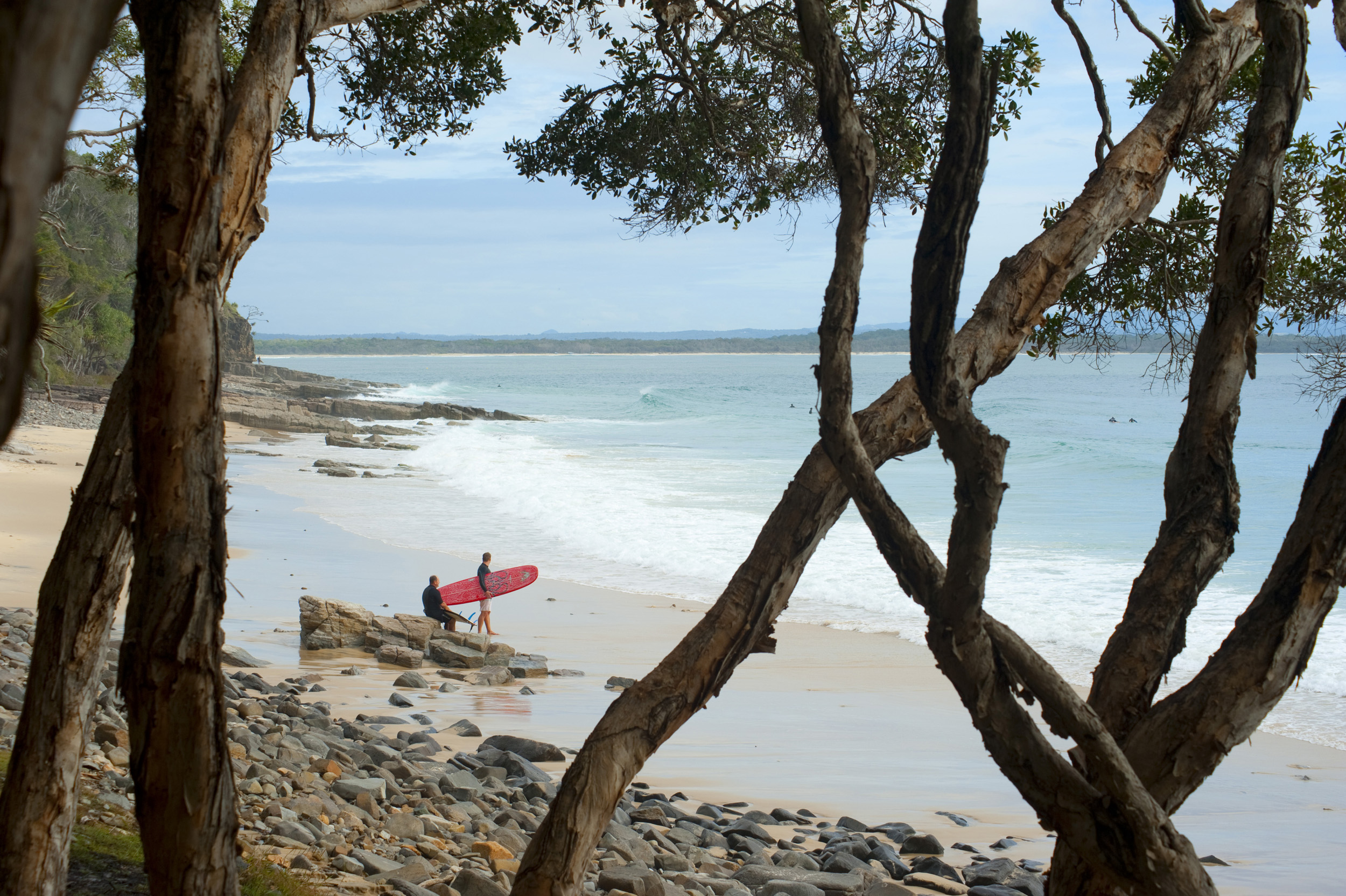 View between tree trunks onto the sandy beach with surfers carrying their surfboards at Granite Bay, Noosa , Queensland, Australia