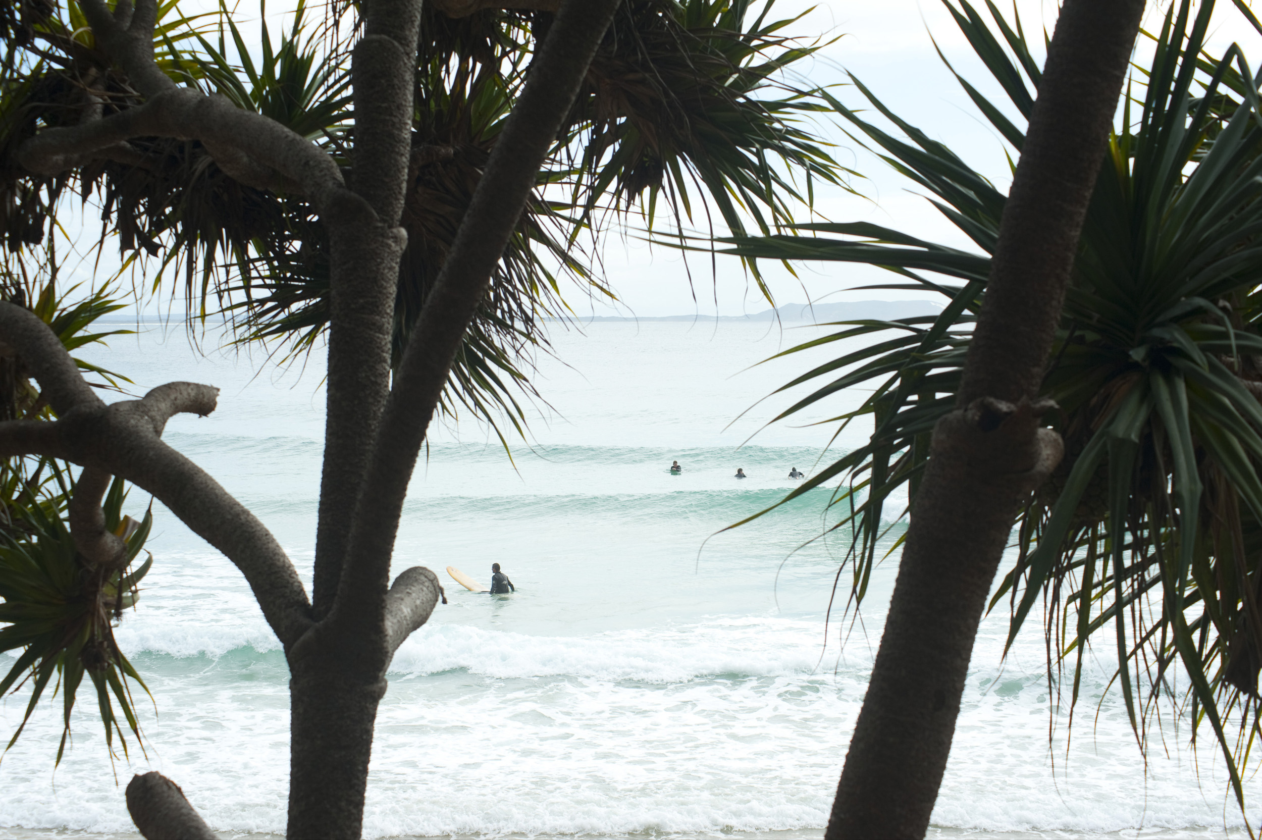 View between tropical palm trees of the beach and surf at Noosa, Queensland, Australia with surfers waiting to catch a wave