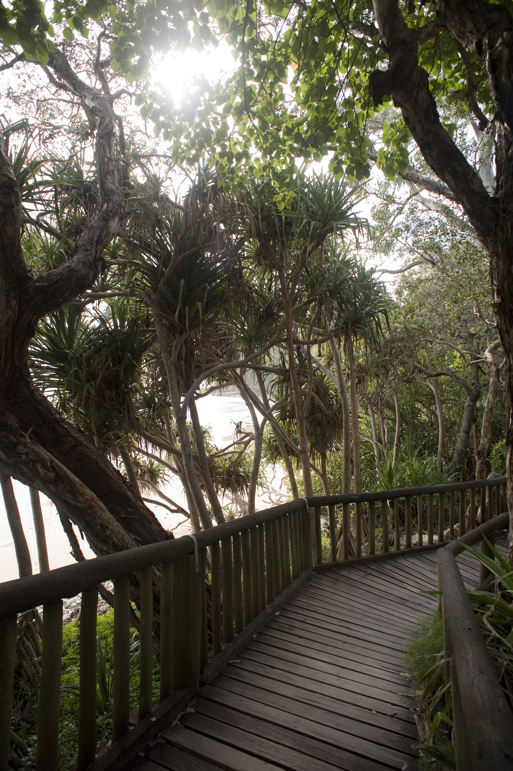 Deserted boardwalk leading through the trees at Pandanus beach, a popular recreational area close to Brisbane, Australia