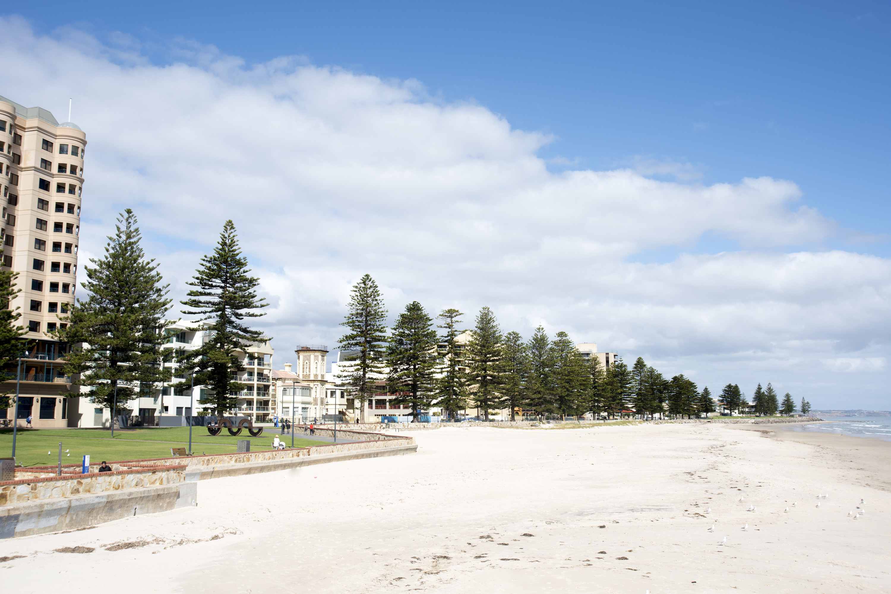 The deserted sandy tropical beach at Glenelg, Adelaide, South Australia overlooked by apartment buildings and a row of pine trees