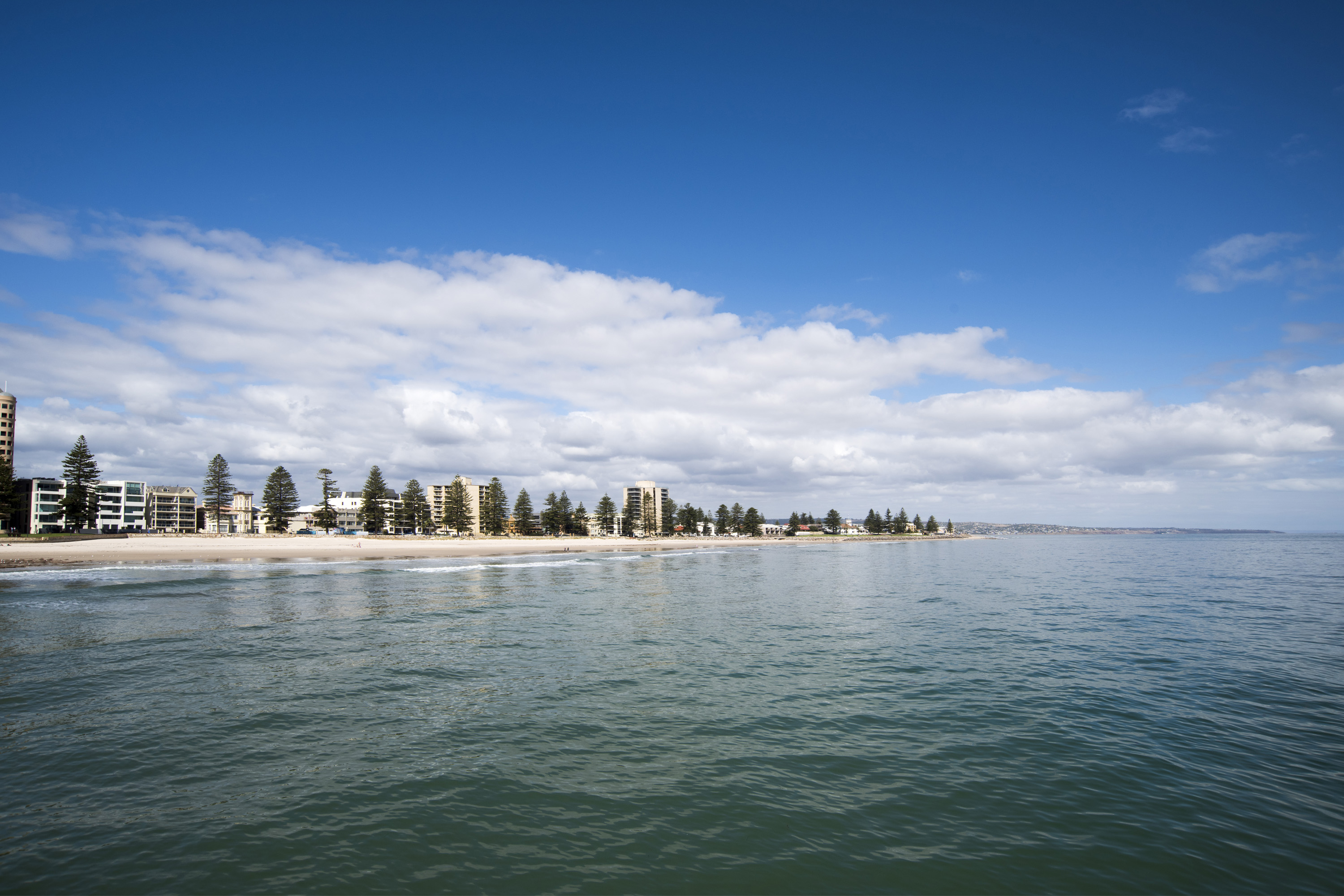 Waterfront coastline with a long sandy beach lined with trees and apartment buildings, Glenelg, Adelaide, Australia, viewed across the water of the bay