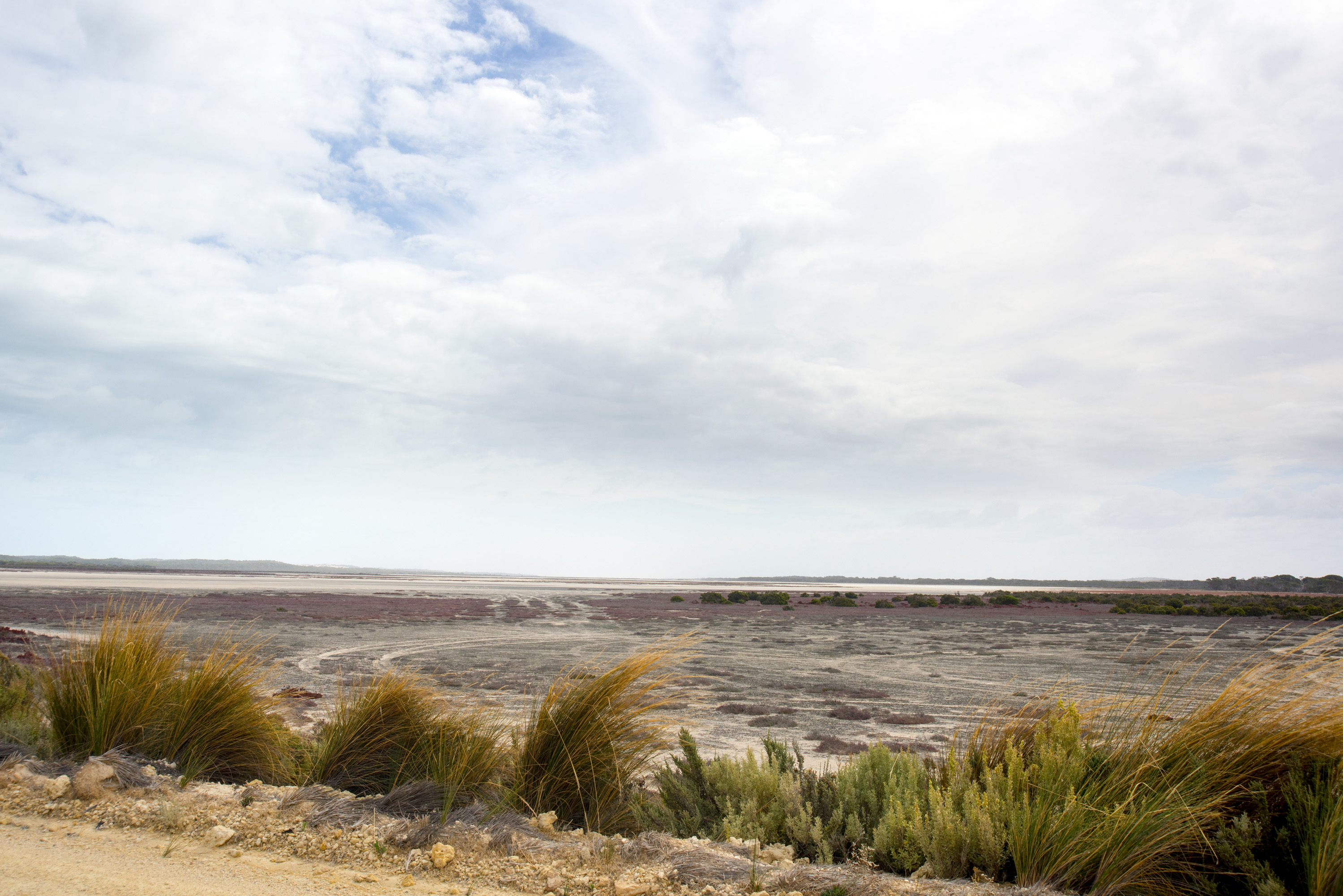The coastline and vegetation at Coorong in the protected lagoon and beach ecosystem with fresh and salt water lakes and wetlands, South Australia with a view from a gravel road