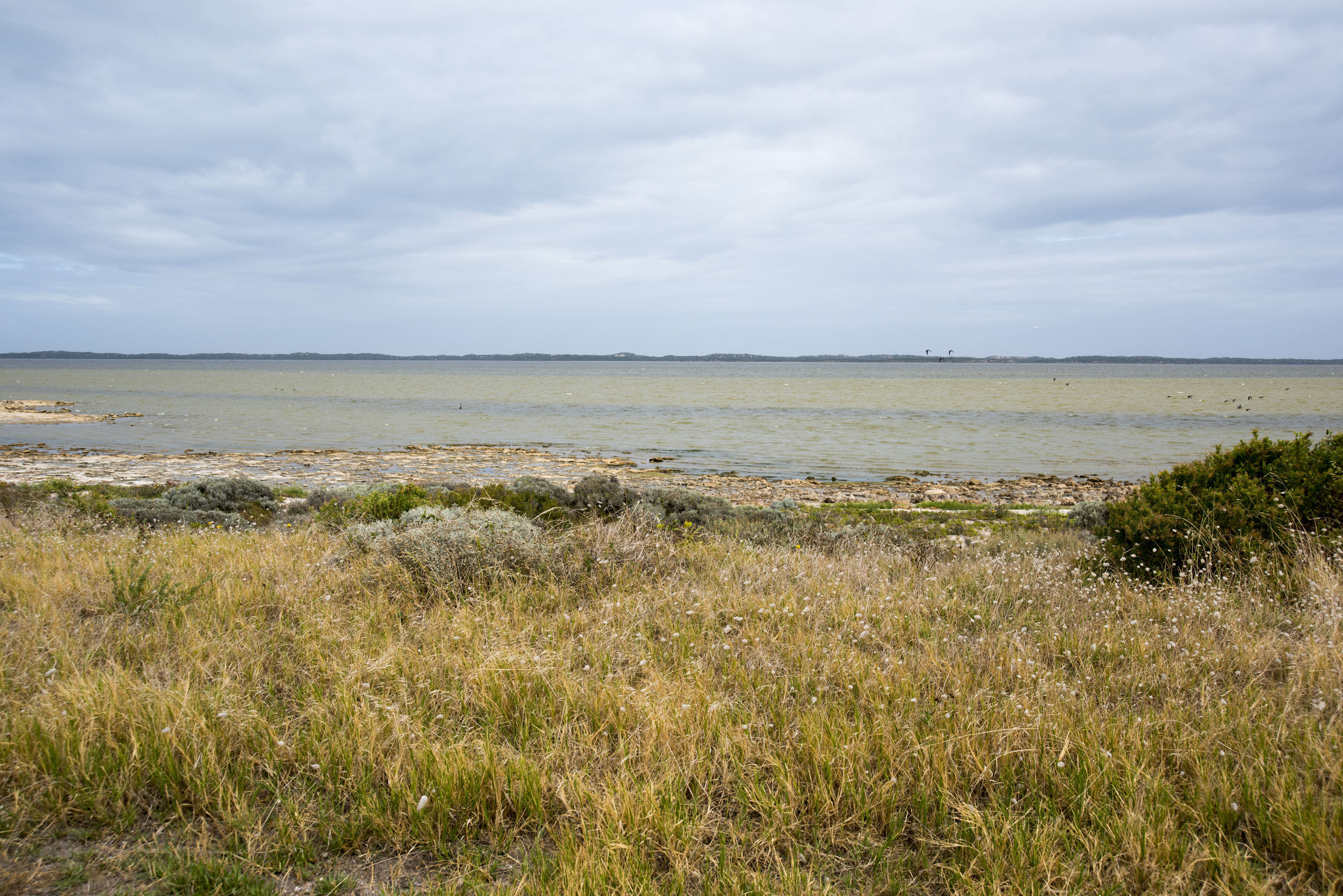 Coastal grasses and vegetation, Coorong Coast, South Australia looking out to sea on a cloudy day