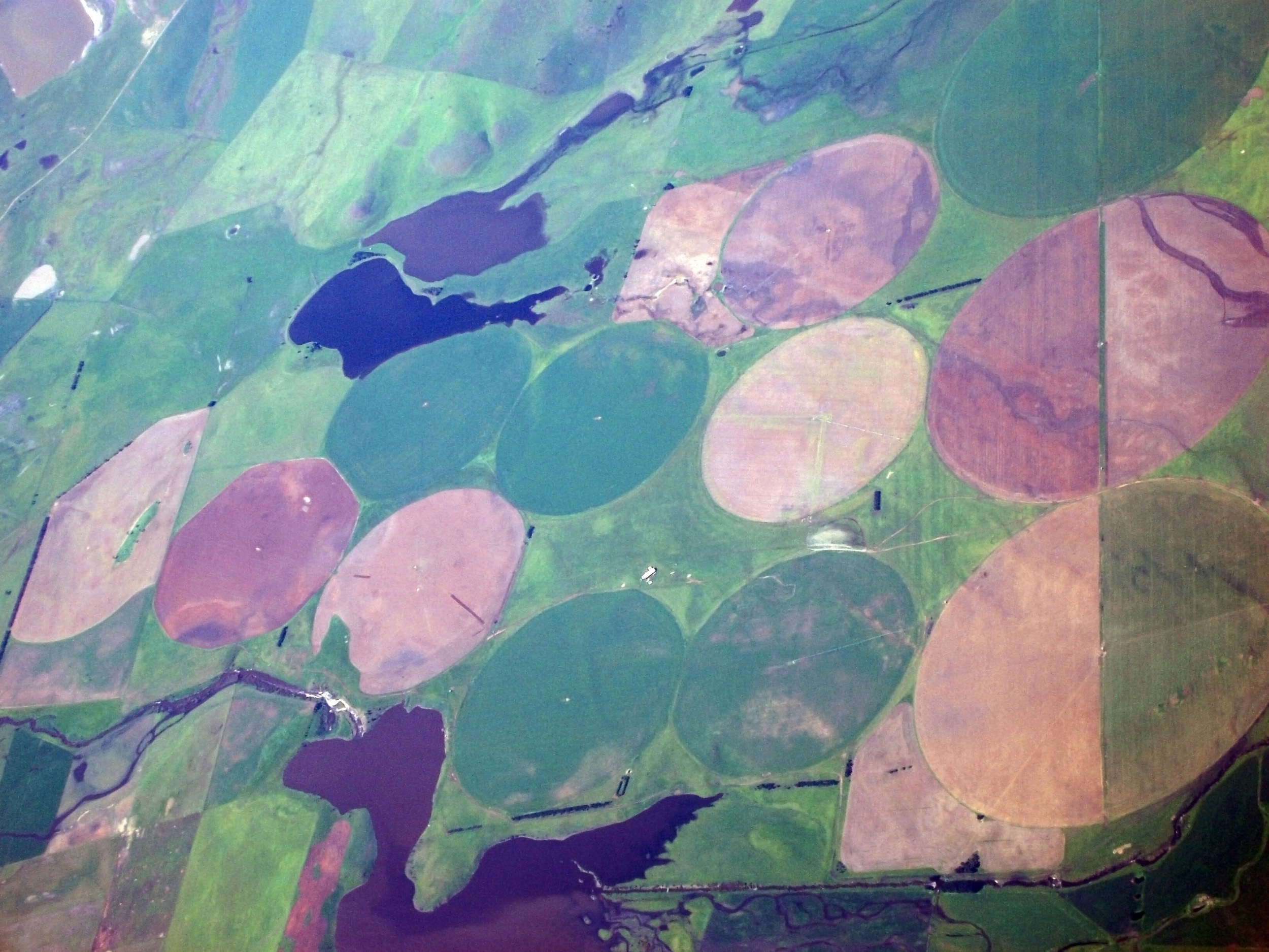 from above - tasmanian farm land  with large circles of crops