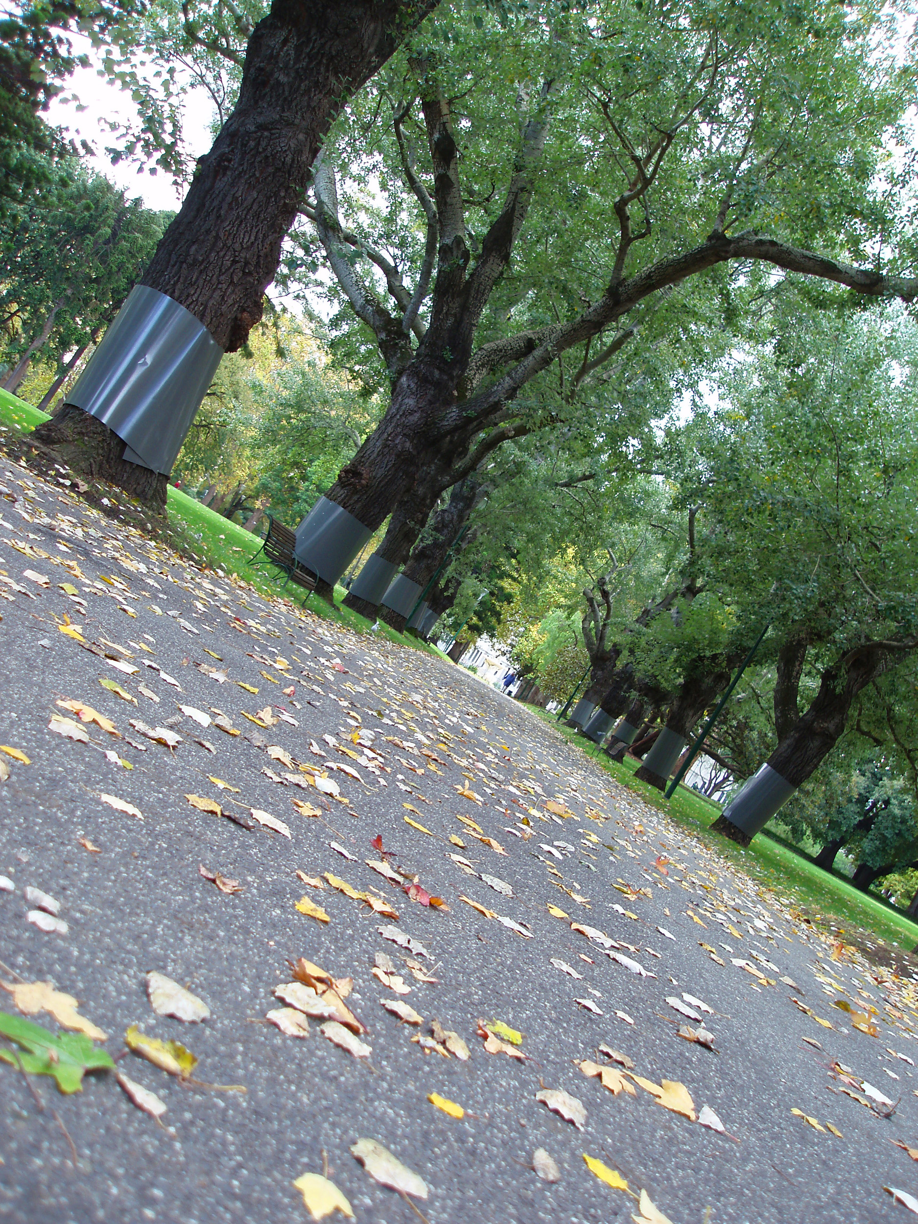autumn leaves on a footpath in carlton gardens