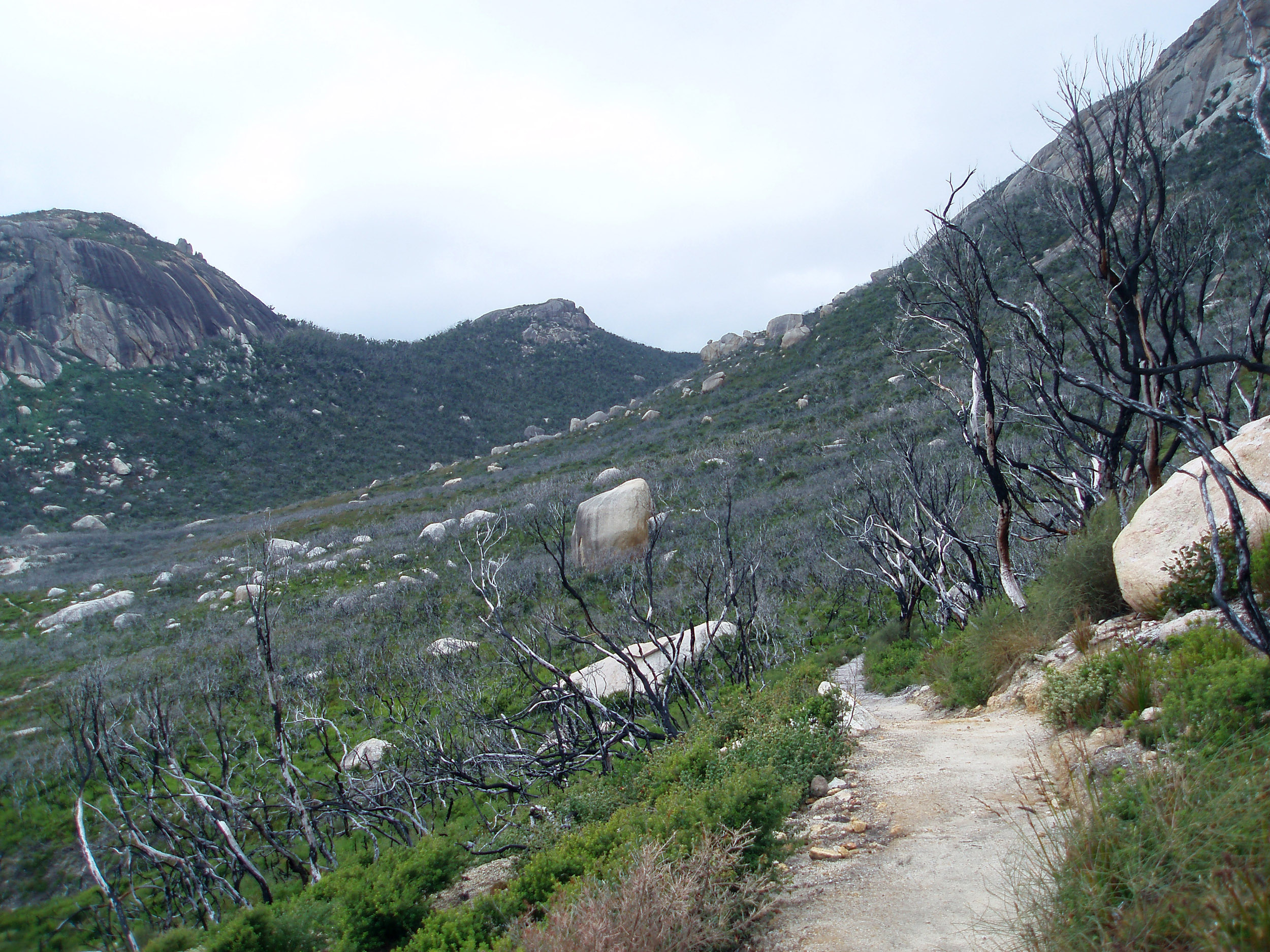 one of several footpaths around wilsons promontory after a bush fire